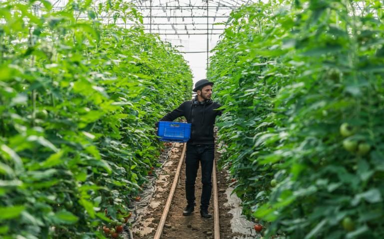 Controversial Ruling Says Organic Crops Don't Have to Grow