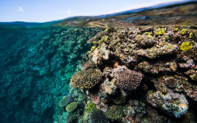 Robots To The Rescue On The Great Barrier Reef Sierra Club