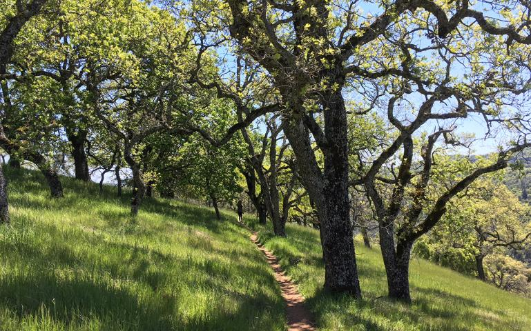 c2b318b5fd90 Henry Coe State Park Is the Bay Area's Best-Kept Backpacking Secret ...