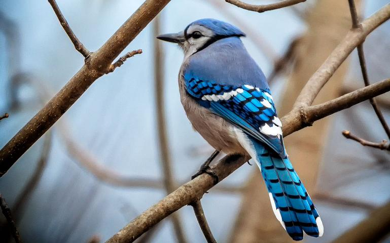 how to participate in audubons christmas bird count - Audubon Christmas Bird Count
