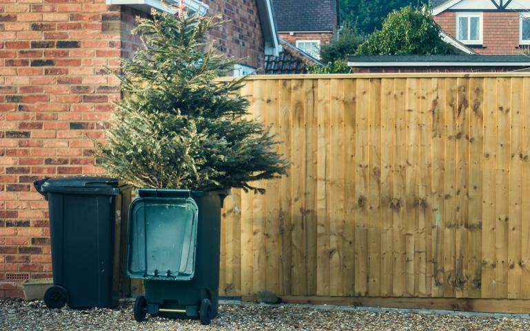 How to Keep Your Christmas Tree out of the Landfill