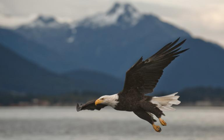 bald eagle endangered essay The endangered species act is under threat — and it's up to us to come to the rescue charise johnson is a research analyst with the center for science and democracy at the union of concerned.
