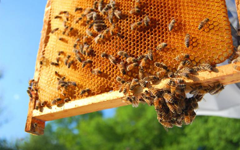 Backyard Beekeeping 101