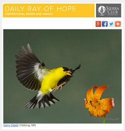 Daily Ray of Hope