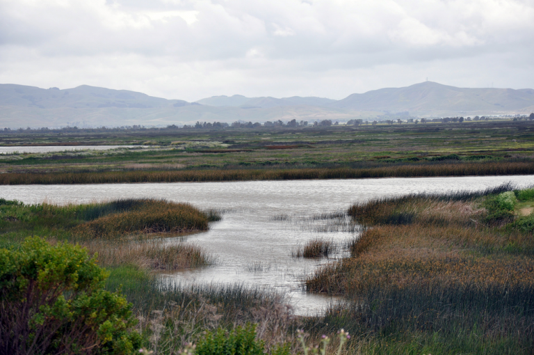 Looking across marsh and open water to far away hills on cloudy, cold day.