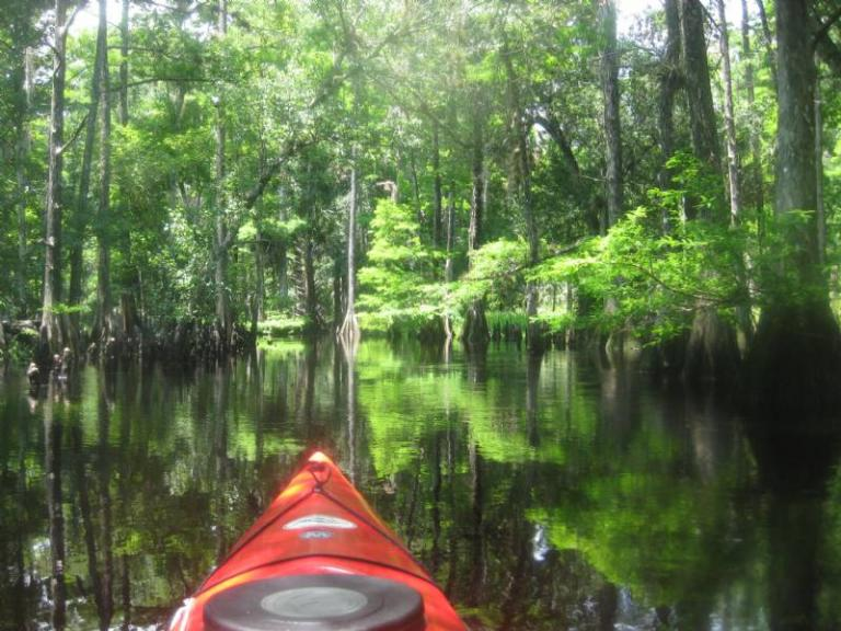 Kayaking on Fisheating Creek