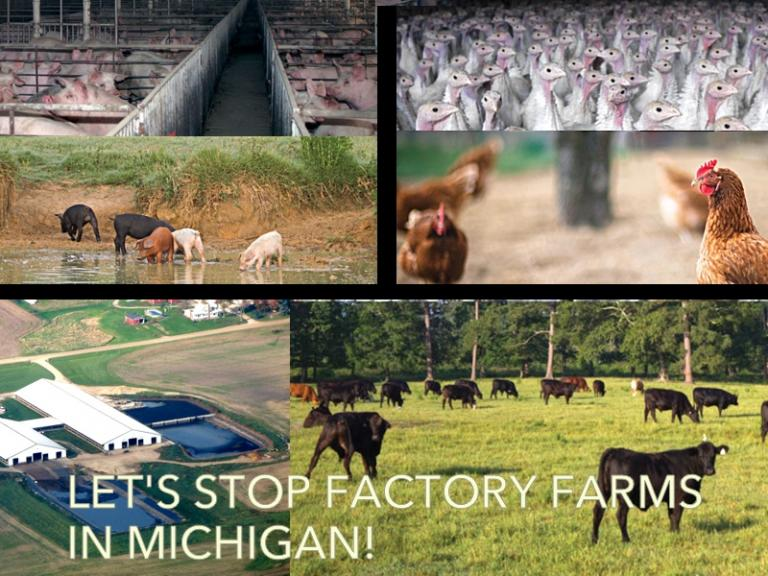 Let's Stop Factory Farms in Michigan!