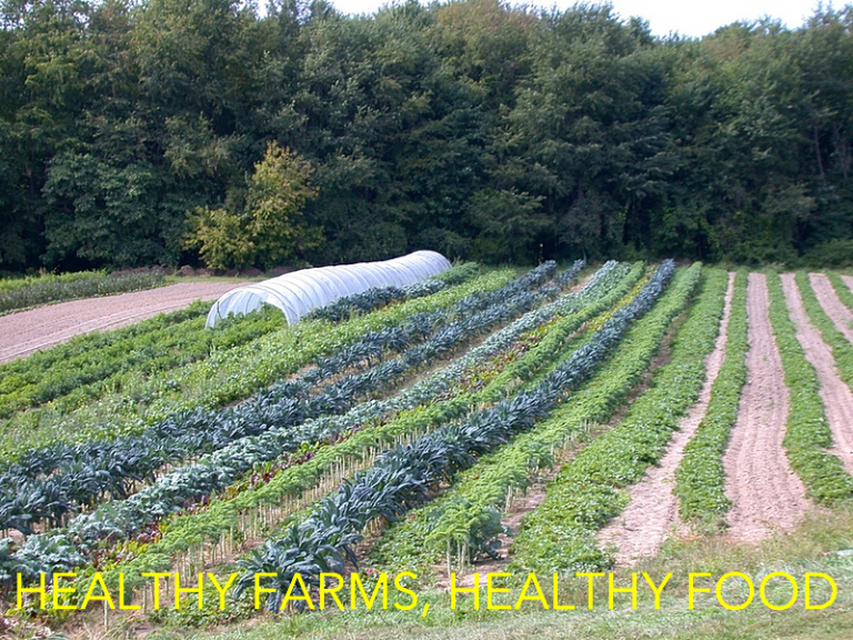 Healthy Farms, Healthy Food