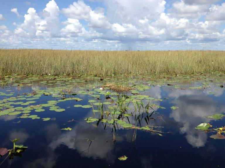 Everglades in an airboat