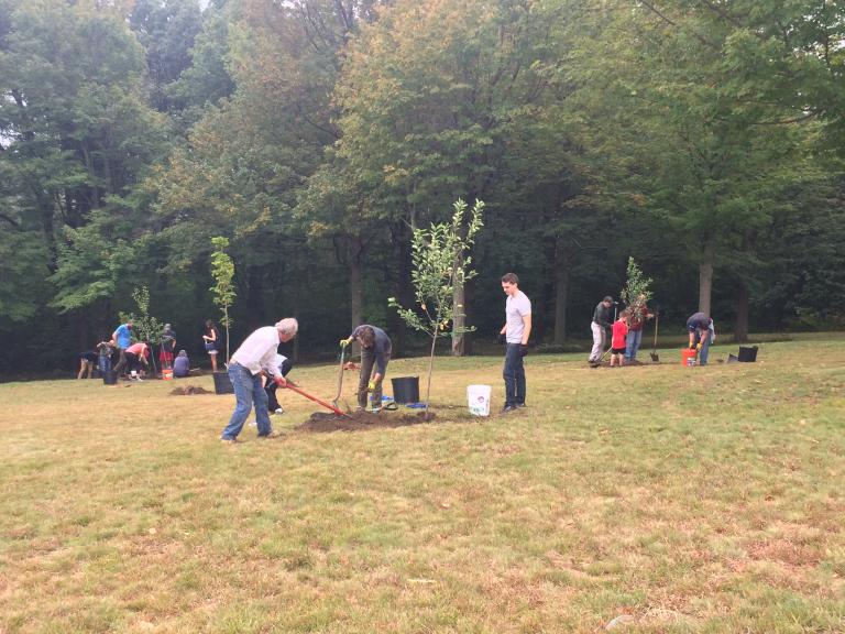 Several teams planting replacement trees for Memorial Grove