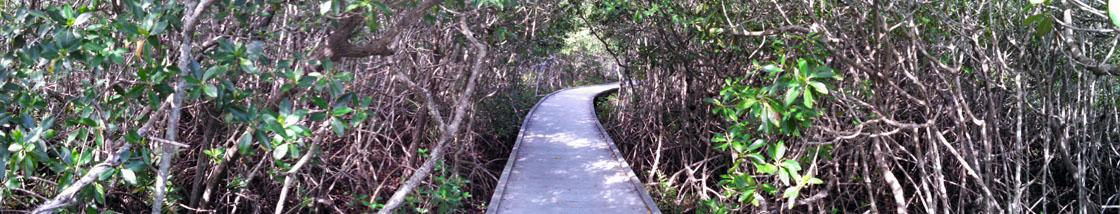 Four Mile Cove Eco Park Mangrove Walk, Cape Coral, FL