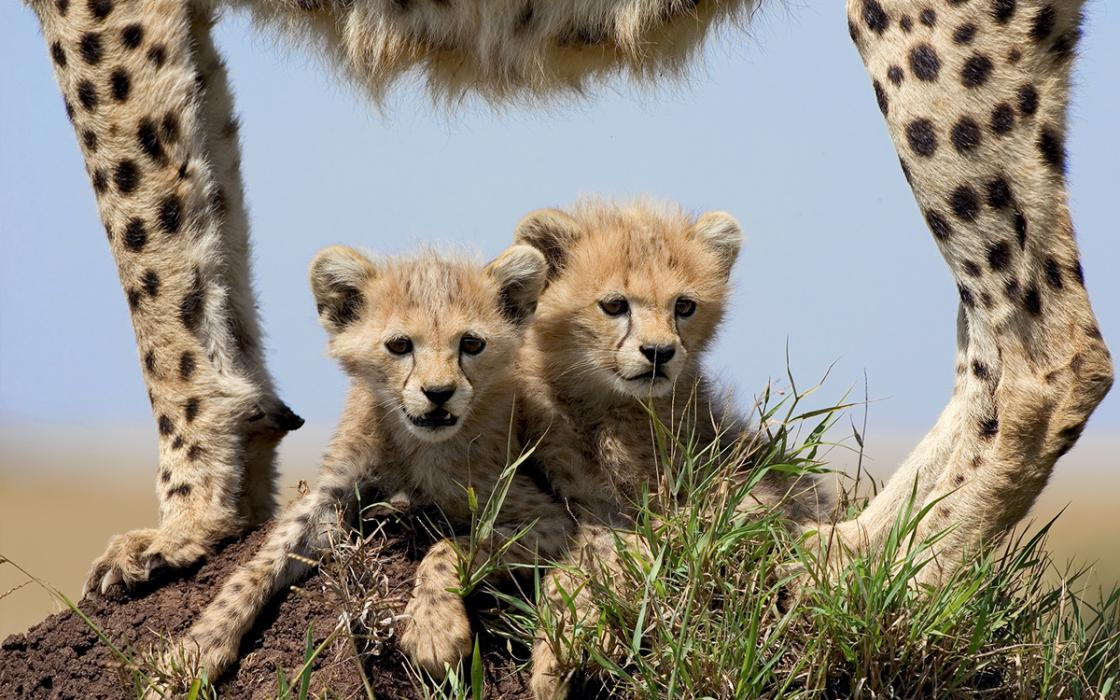 The Cutest Baby Animals You've Ever Seen | Sierra Club