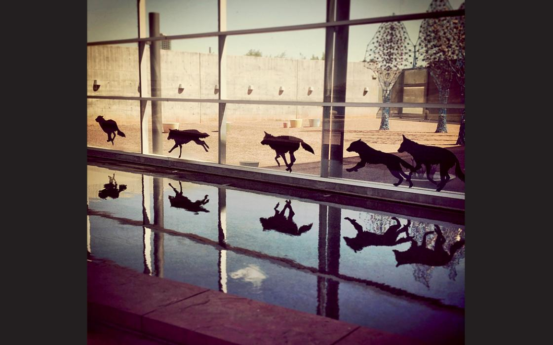 Lauren Strohacker's installation NO(w)HERE (2013), at the Tempe Center for the Arts, juxtaposes animal images with built spaces to emphasize that urban sprawl displaces wildlife.