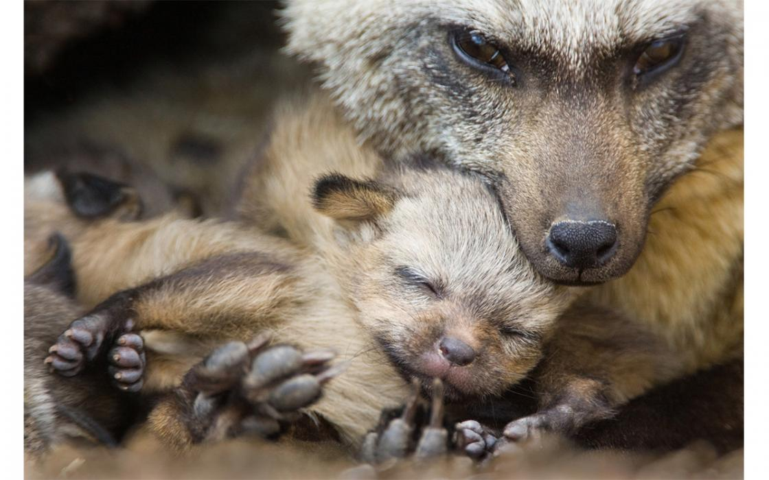 Where Baby Animals Sisterhood And Conservation Collide Sierra Club