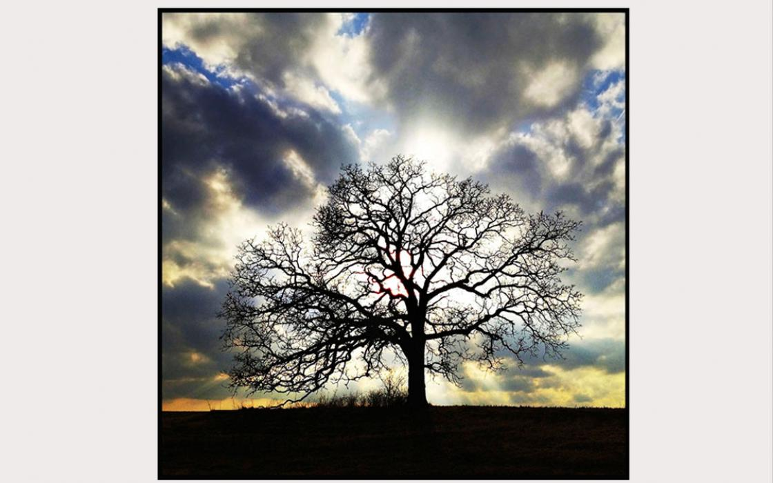That Tree: A Year in the Life of a Lonely Oak | Sierra Club