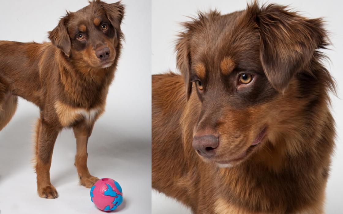 Stella, 1, was adopted from the San Francisco SPCA just a few weeks before these photos were taken.