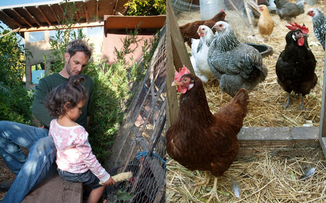 Christopher Shein's 6,500-square-foot backyard farm in Berkeley, California, is home to 30 chickens and ducks.