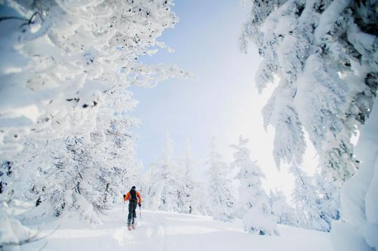Cross country skier on trail with snow covered trees
