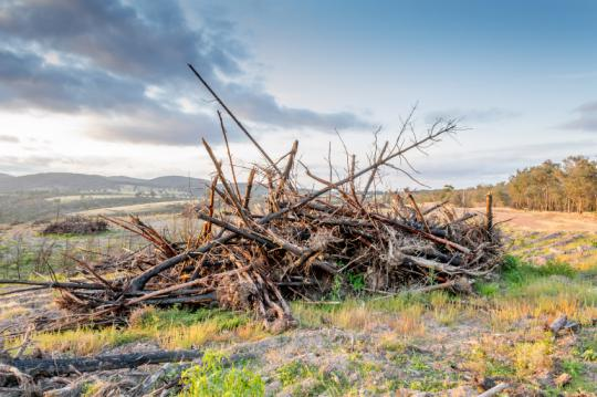 Should you burn a brush pile or let it decompose?