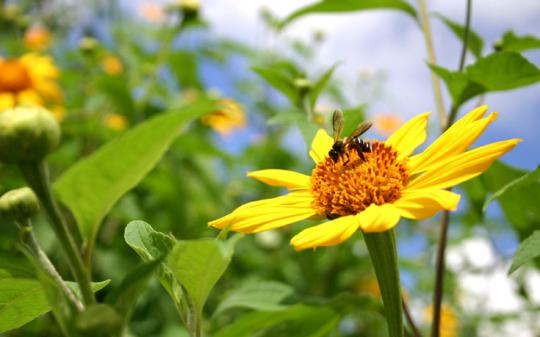 Get the scoop on growing a bee-friendly garden.