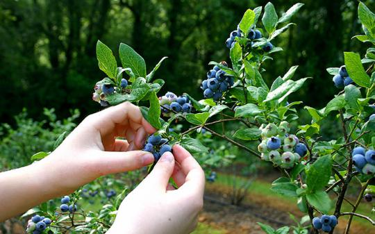 Foraging -- Read our 6 techniques!
