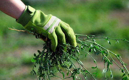 What's a green alternative to roundup?
