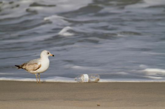 99 percent of birds will be affected by plastic ingestion by 2050