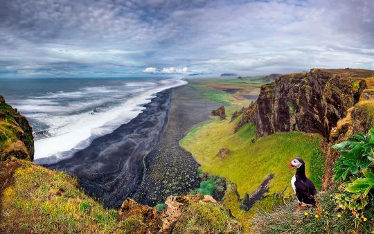 The basalt cliffs of Dyrholaey, a nature reserve on the south coast of Iceland, provide prime nesting sites for puffins, but poor footing for humans: In 2012, two tourists standing on the edge started a landslide and fell 40 yards to the beach below. Both