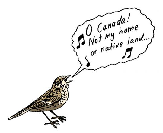 The Baird's sparrow, a favorite of U.S. birdwatchers, is being pushed out of North Dakota and Montana and into Canada  by climate change.