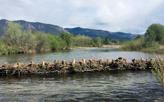One of three beaver-dam analogues on the Scott River in Northern California.