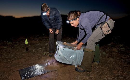 A well-planned, successful conservation translocation of 150 kangaroo rats by the San Diego Zoo in 2010.
