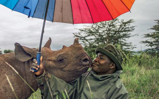 John Kamara tends to an endangered black rhinoceros at Kenya's Lewa Wildlife Conservancy.