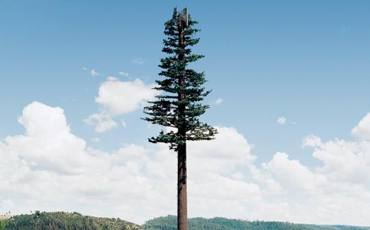 A cellphone tower disguised as a pine tree stands near the eastern border of Yosemite National Park (from Robert Voit's New Trees collection).
