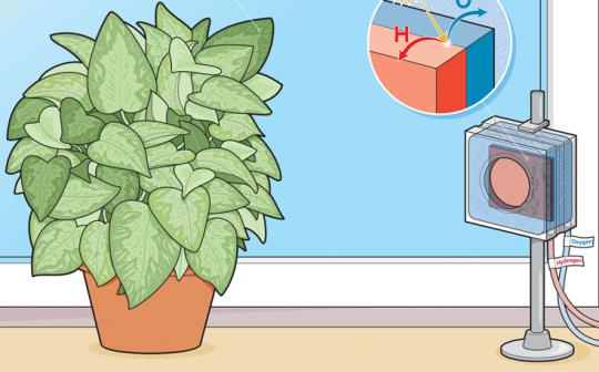 Plants make photosynthesis look easy.