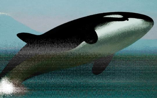 Orcas have no protections against air pollution.