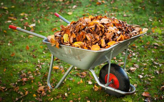 Don't throw out the leaves -- throw them in the compost!
