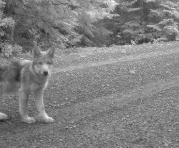 The state of Oregon de-lists Grey Wolves from the Endangered Species Act.