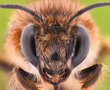 New Study Shows Roundup Kills Bees | Sierra Club