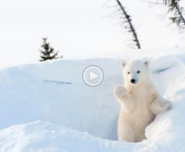 Another parent takes another video of their kid doing something cute. But this time, it's a polar bear.