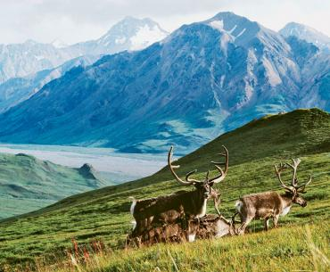 Arctic National Wildlife Refuge–Polar Bear Seas: Alaska