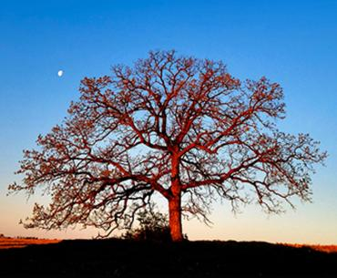 That Tree: A Year in the Life of a Lonely Oak