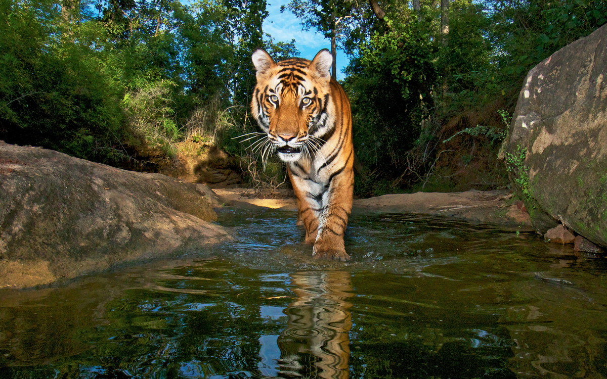 tiger reserves in india pdf