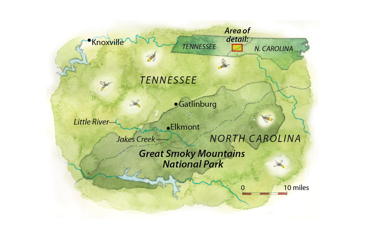 Great Smoky Mountains National Park Is One of the Few Places to ...