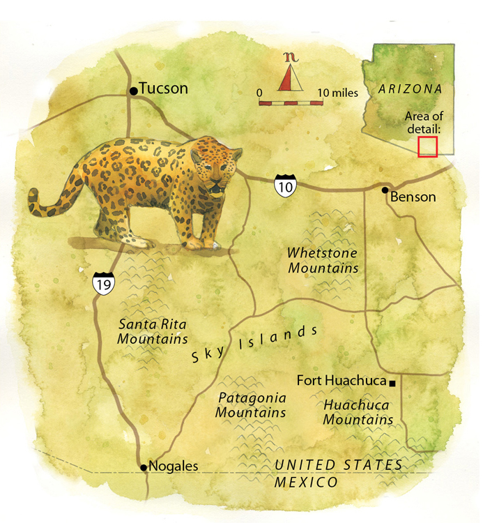Jaguar territory in the southern United States and northern Mexico