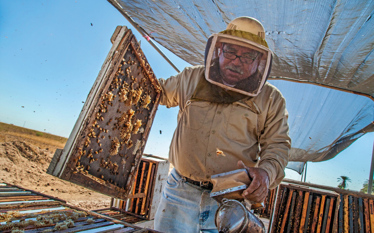 Ruben Sanchez says his bees are stressed by the blowing dust.