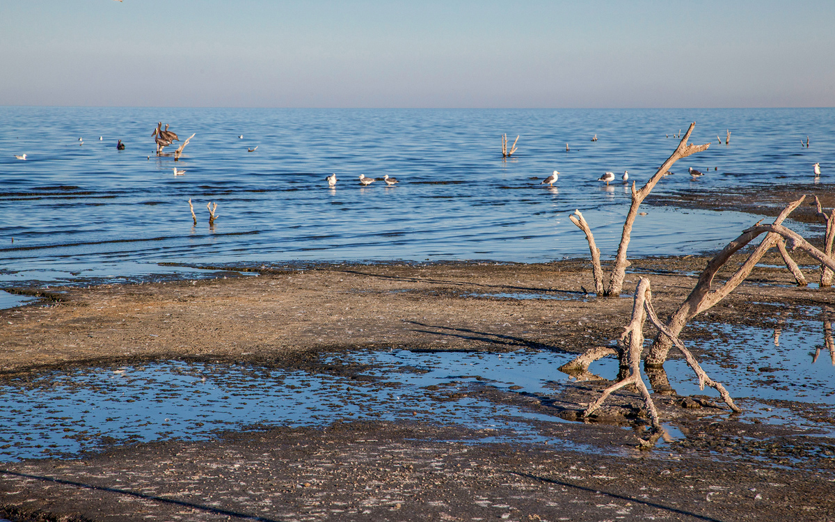 The Salton Sea is an important stopover for birds migrating on the Pacific Flyway.