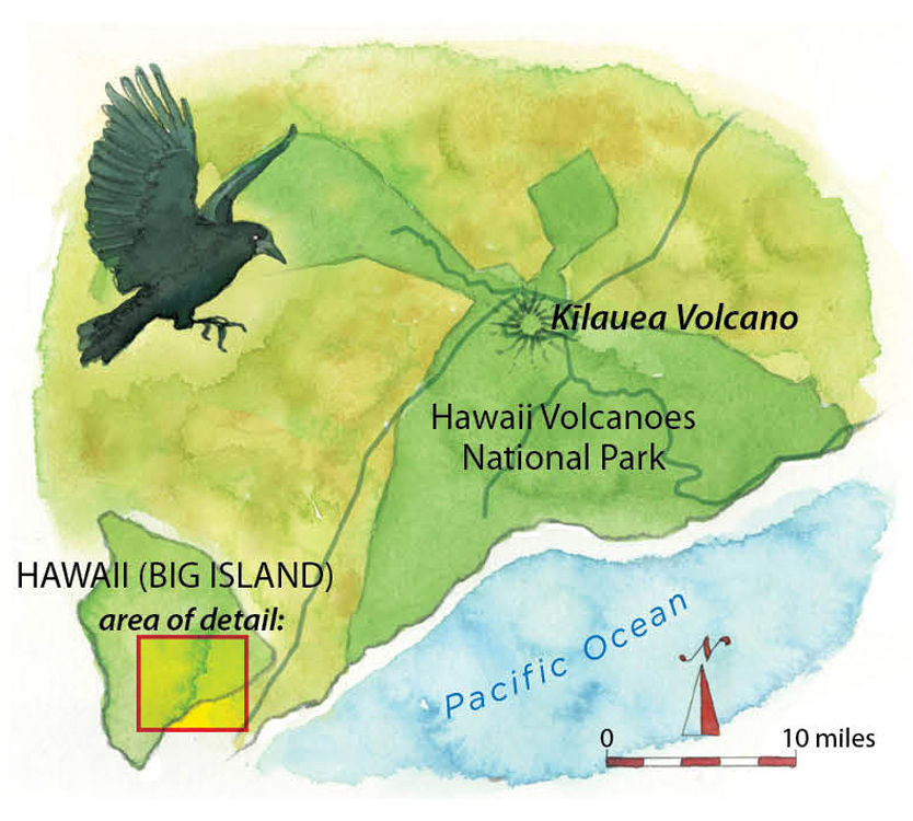 In Search of an Extinct Crow on a Live Volcano Sierra Club