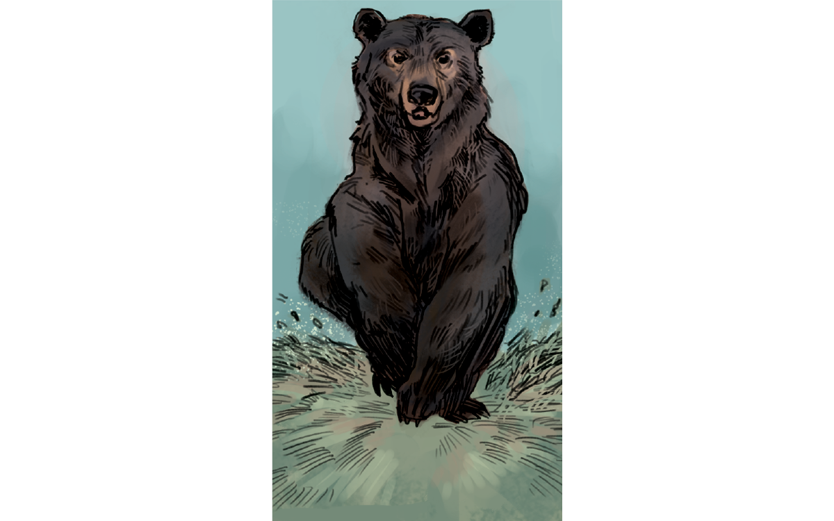 Illustrations show a bear sitting in a creek and a man and woman watching her, a man pointing at the bear and wanting to get closer while the woman hides behind a tree, the bear with two cubs looking at the couple, the mother bear charging, and the couple