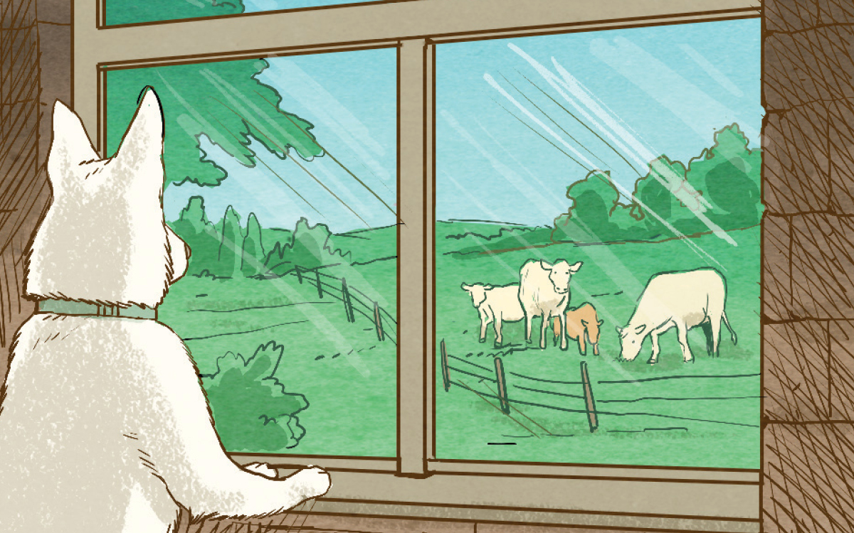 How to Escape a Cattle Stampede | Sierra Club