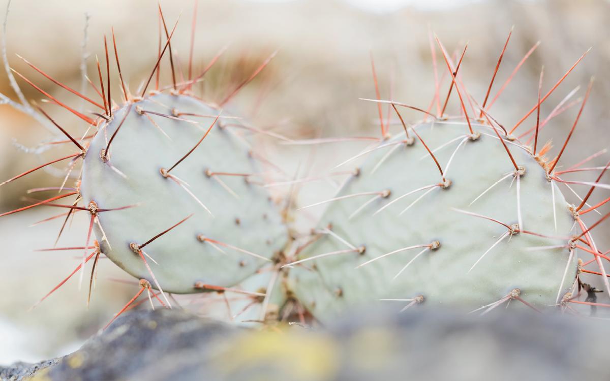 Close-up of a prickly cactus.